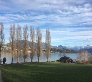 trees lined up along lake